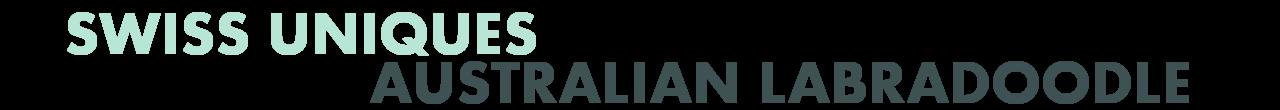 swiss uniques australian labradoodle